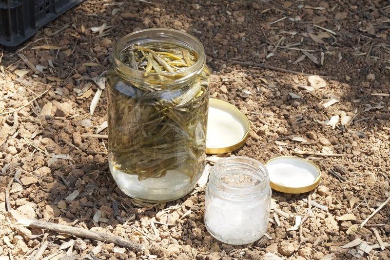 Crithmum and fleur de sel