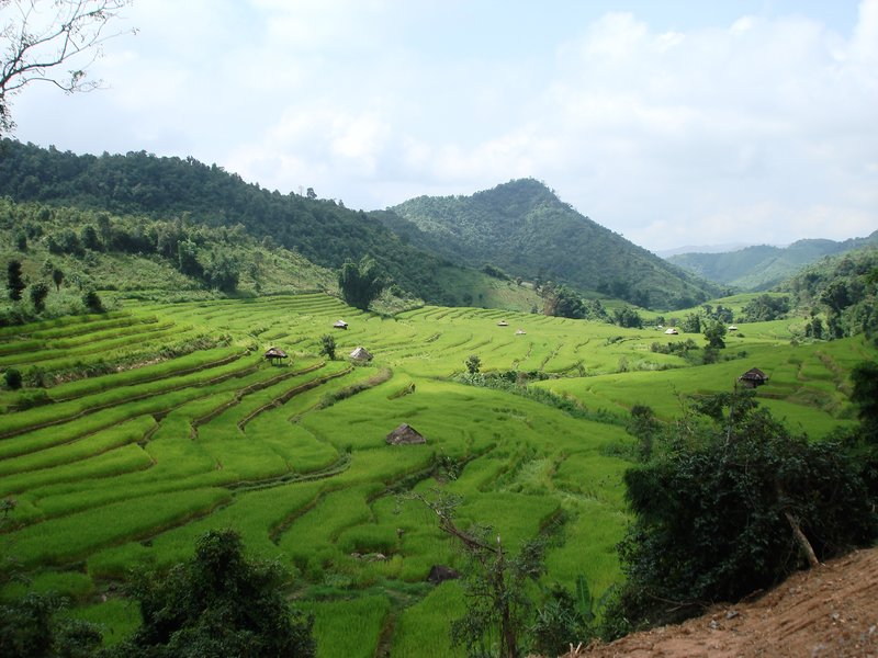 Rolling paddy fields between La Up and Ban Dong