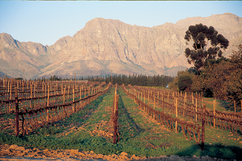 Nederburg Vineyards