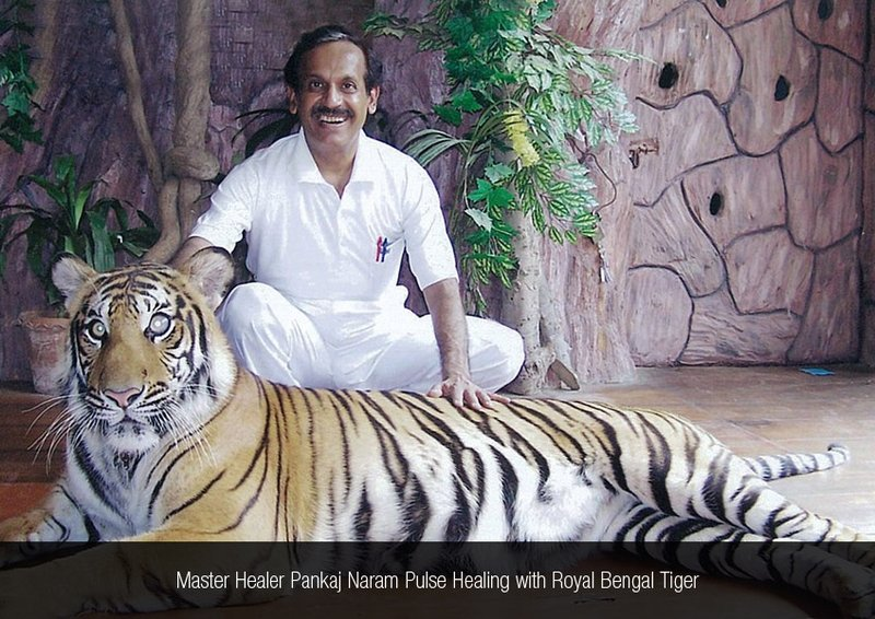 Dr. Pankaj Naram Pulse Healing with Royal Bengal Tiger