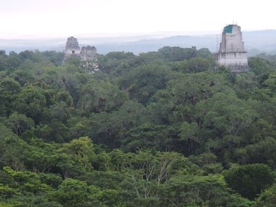 highest point in Tikal
