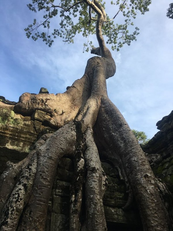 large_90_tree-temple2.jpg