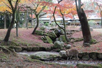 deer scene nara