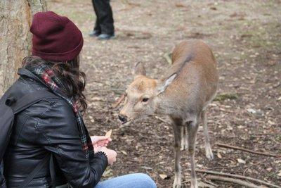 me and deer nara