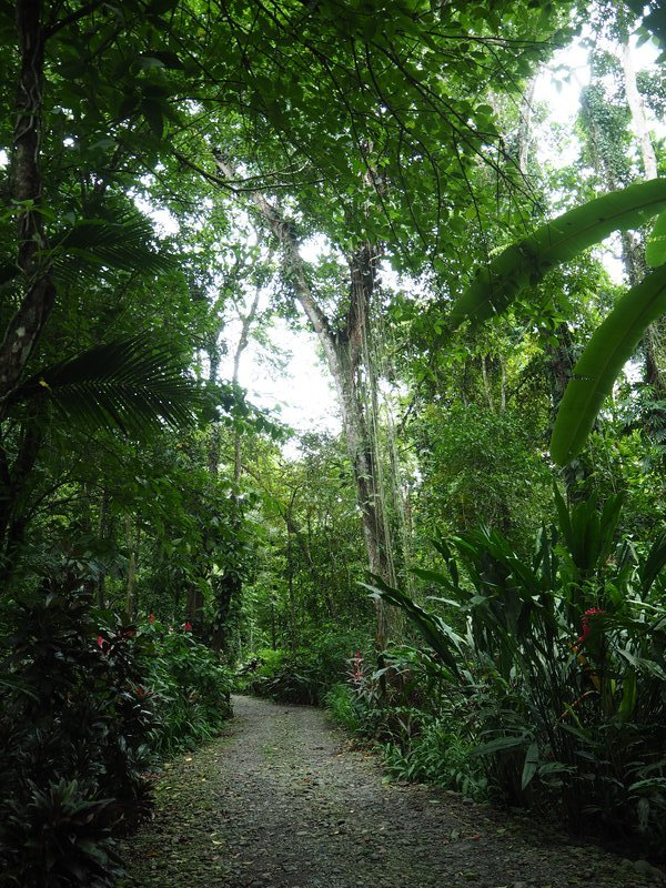 The way into the rainforest