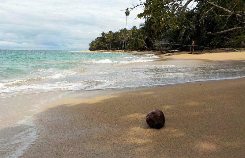 Coconut landing