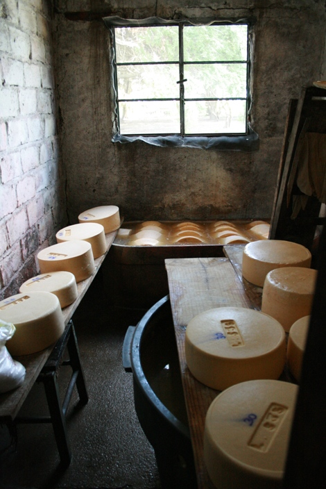 cheese making on 3 buttons farm