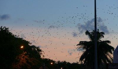 Bats and Batman