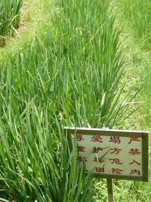 Rice & sign