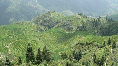 Longji landscape