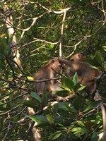 90_macaques_preening.jpg