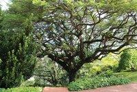 tree_in_botanic_park.jpg