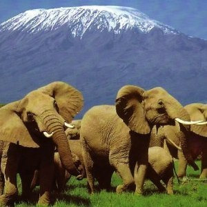 mt-kilimanjaro-amboseli-safari-tour