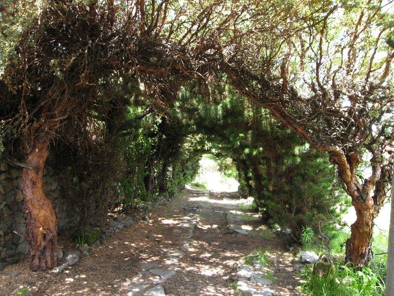 Tree-lined path leading to the entrance of Posada Santa Barbara, Chucuito, Peru.