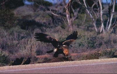 Eagles Nullarbour - Eucla