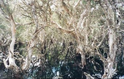 Mangimup Swamp - Esperance