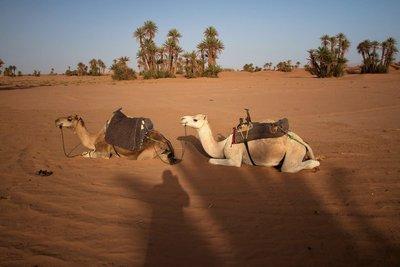207_Desert_Day4.jpg