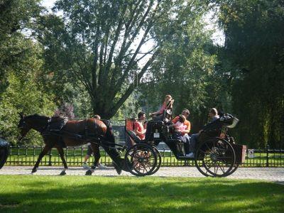 230418376087082-Brugge_Horse..ose_Brugge.jpg