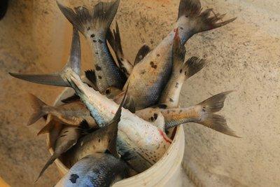 230d_Fishing.jpg