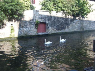 312489775964431-Beautiful_Br..ose_Brugge.jpg
