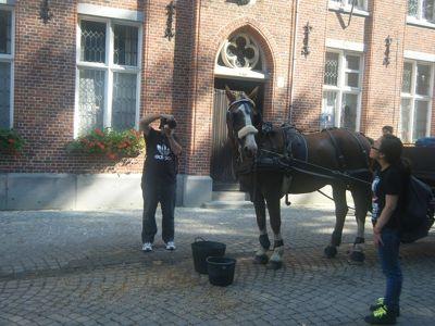371083856087083-Brugge_Horse..ose_Brugge.jpg