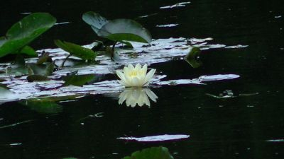 5892548-Monet_Gardens_water_lily_Paris.jpg