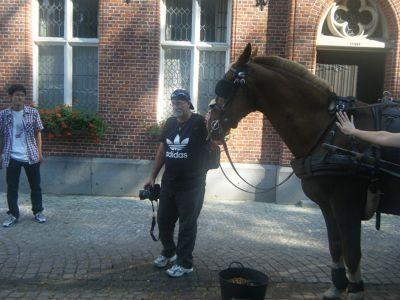 603567466087084-Brugge_Horse..ose_Brugge.jpg