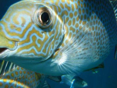 Colourful fish Pulau Tioman by aussirose