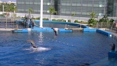 689200976053706-Dolphin_show..e_Valencia.jpg