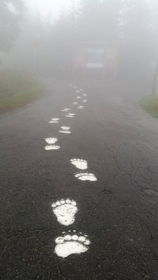 74_Vancouv..Bear_Tracks.jpg