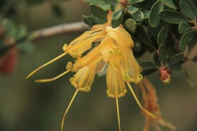 Flower_-_Chittick.jpg