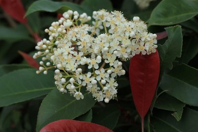 Tip_-_Flowers_1.jpg