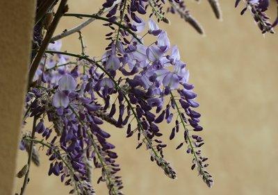 Tip_-_Flowers_7.jpg