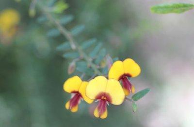 Tip_-_Wildflower_1.jpg