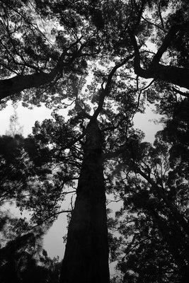 Tree_Top_5.jpg