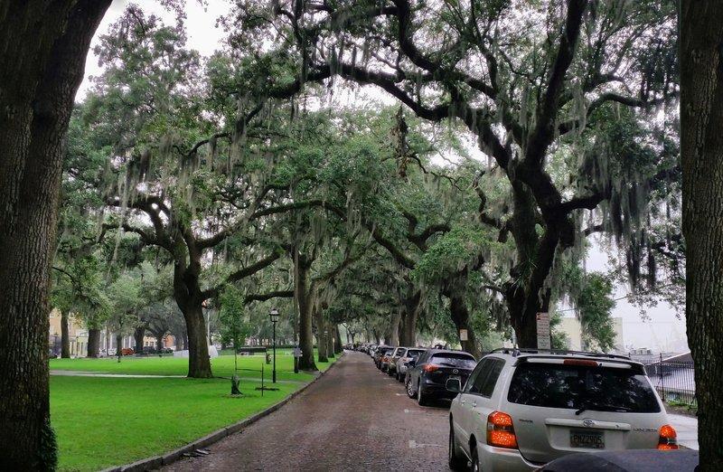 171 Savannah - 1