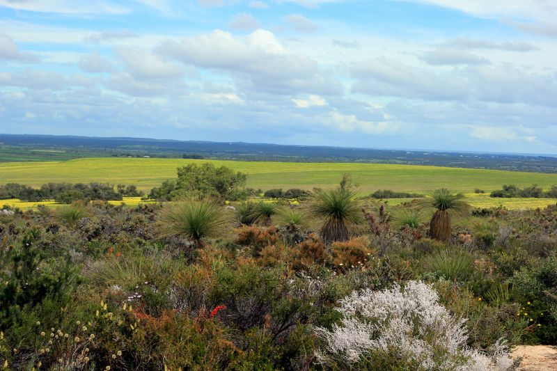 Lesueur National Park WA for Wildflowers