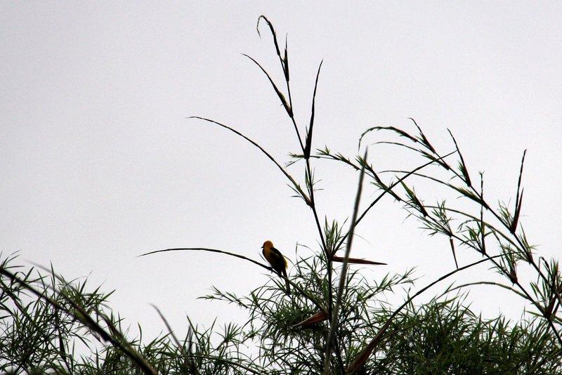 206 Belize - Birds