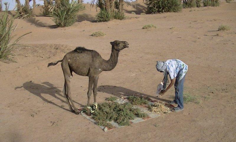 M'Hamid Sahara Desert