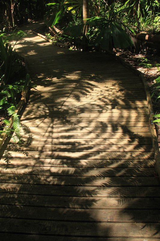 Rainforest boardwalk Cape Trib 9