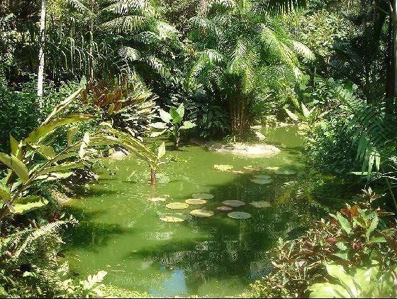 Singapore Botanical Gardens - Singapore
