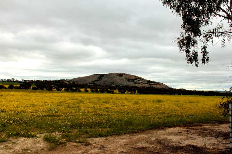 Kokerbin Rock near Shackleton Western Australia