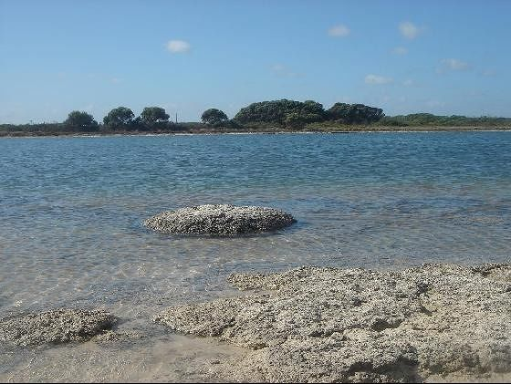 Stromatolites Perth - Cervantes