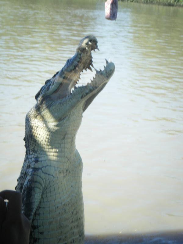 Darwin Croc Jumping Cruise - Darwin