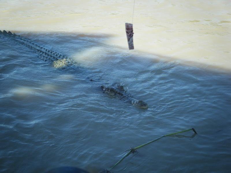 Darwin Jumping Croc Cruise - Darwin