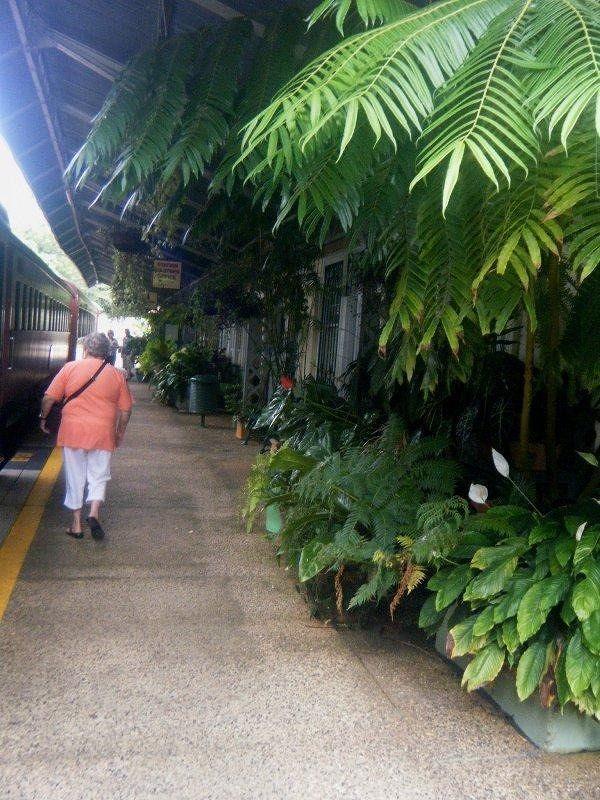 tropicrd jumps off Kuranda train for jumpingnorman - Cairns
