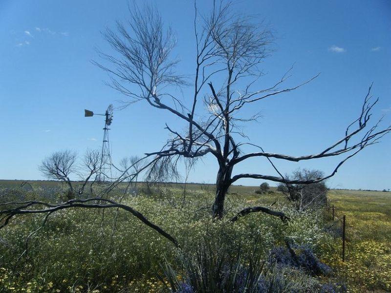 Perenjori wreath flower windmill marker - Perenjori