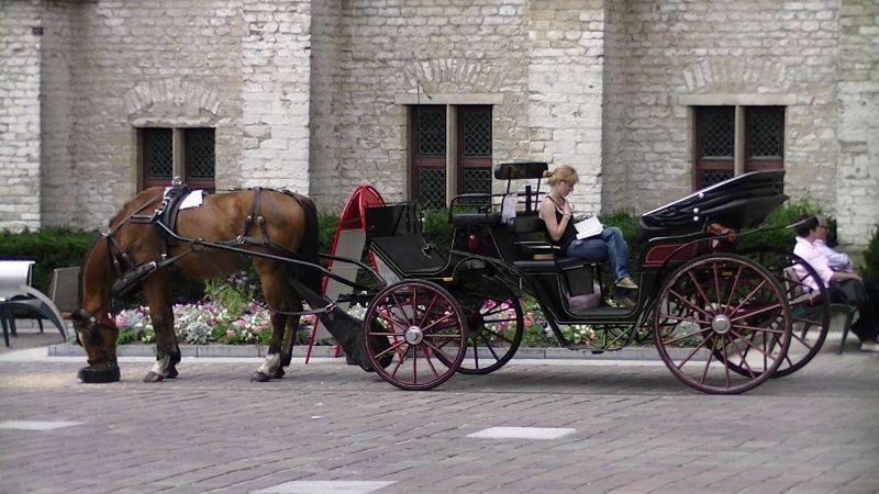 Charming Gent by aussirose - Gent
