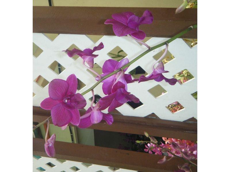 Kuala Lumpur Orchid Gardens by aussirose