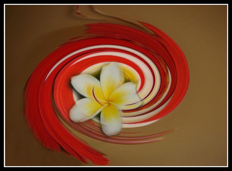 Frangipani Twirl Photoshopped by aussirose
